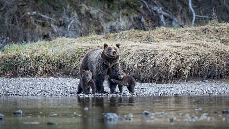 Jackson-Hole-Wildlife-Safaris