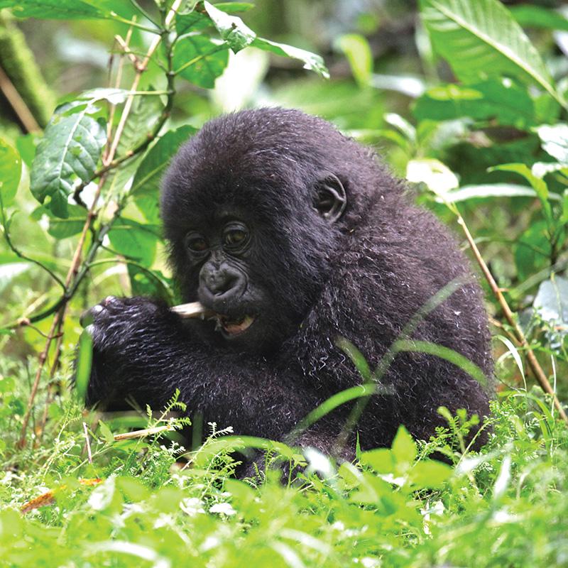 Vacationsmag-Gondwana-Ecotours-Rwanda2