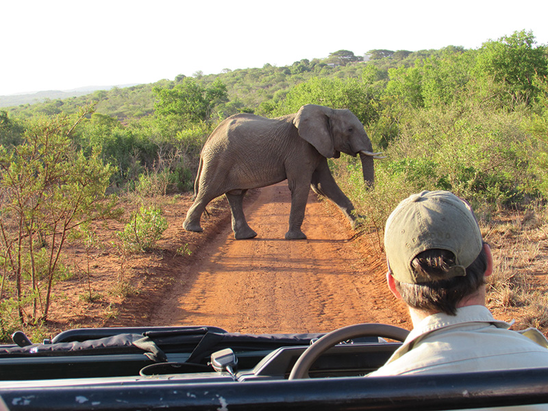 Vacationsmag_south-africa-Phinda_elephant-on-road_SM