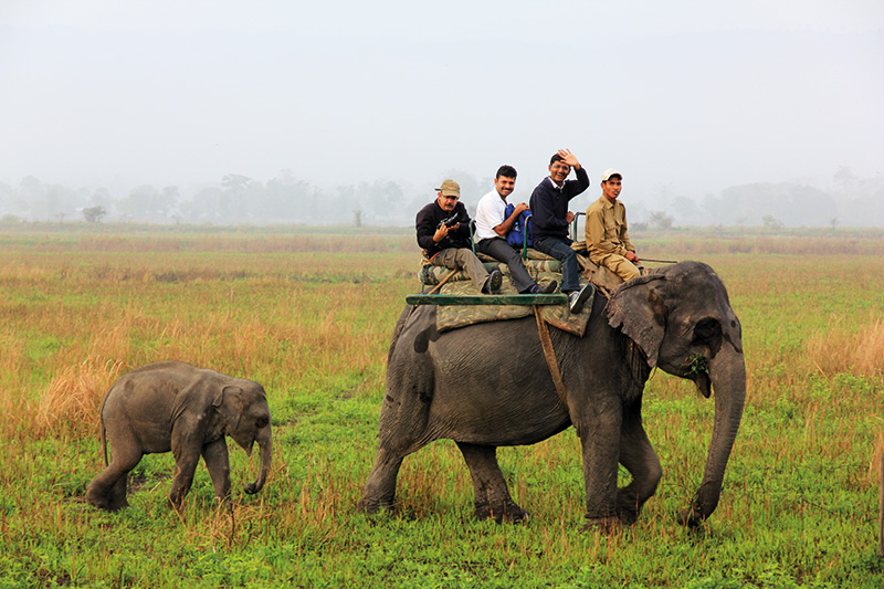 Vacationsmag_Elephant-safari-Kaziranga-(2)_0716