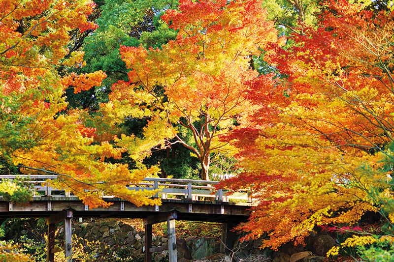 KYOTO, inside japan, autumn leaves, Japan, tea ceremony, geisha, geiko,