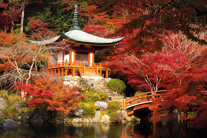 Vacationsmag_Kyoto_Japanese-maple-aflame-in-a-tranquil-garden_0716