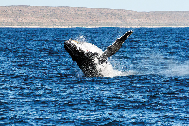 Vacationsmag_swim_with_whales