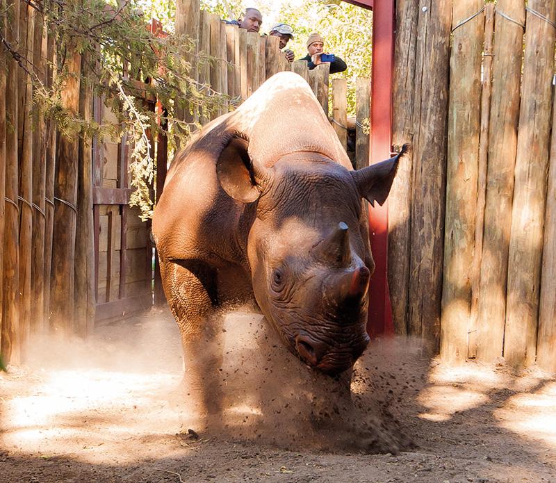 Vacationsmag_Sanctuary-Retreats_Rhino