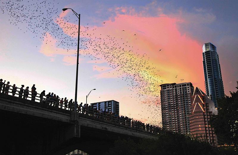 100_austin_south-congress-bat-bridge