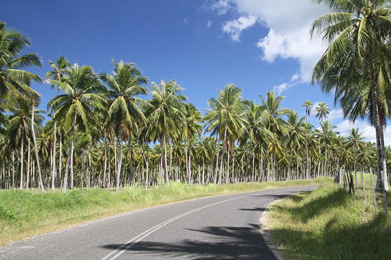 101_vanuatu_img_0664-gen-road-thru-coconut-plantation-ajones