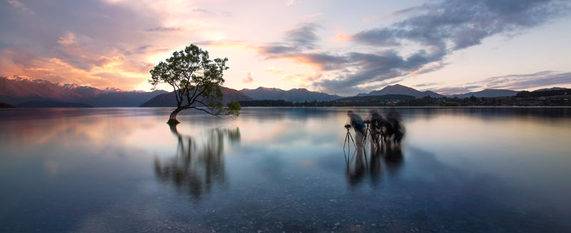 Wanaka, New Zealand, Wanaka Tree