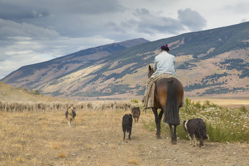 gaucho, Chilean Corraleros, horses, Chile