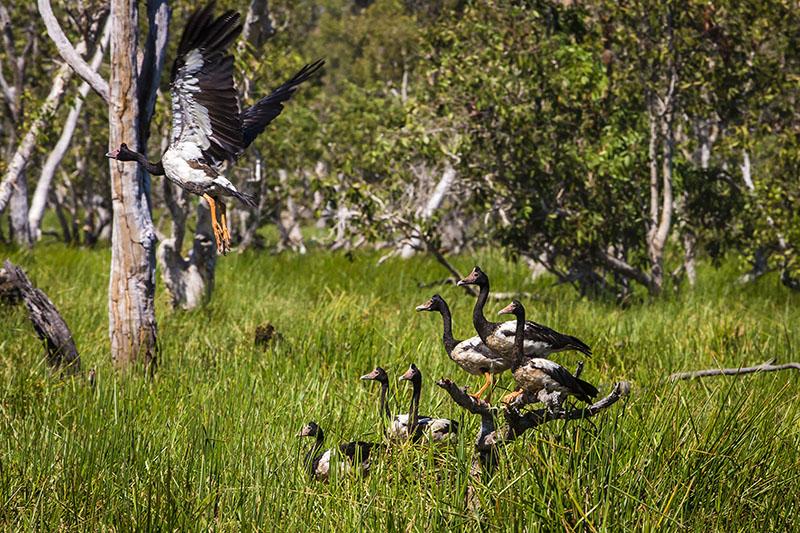 Richard I'Anson, TheTop End Wilderness Photo Safari, Wild Bush Luxury's,Bamurru Plains