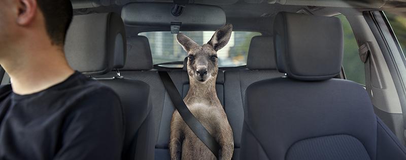 Qantas, Uber, kangaroo