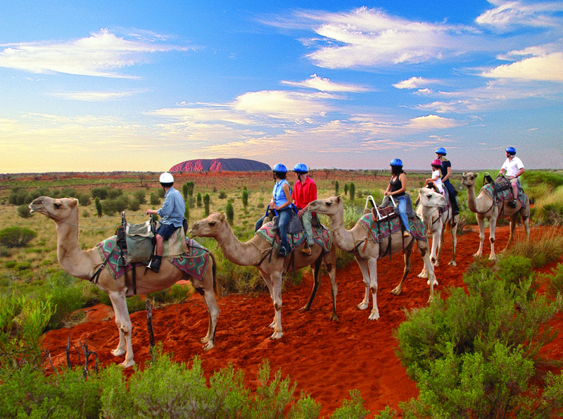 Camel tour, Uluru, Northern Territory, Australia