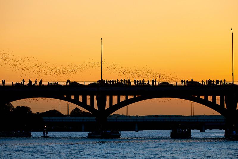 Congress Ave bridge, Austin, Texas