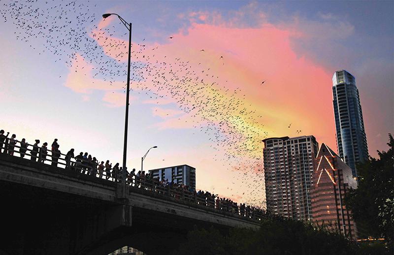 South Congress Bat Bridge, Austin, Texas
