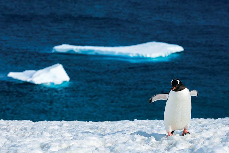 penguins, Greg Mortimer, cruising