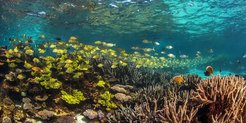 coral, tropical fish, Ningaloo Reef, Sail Ningaloo, Western Australia