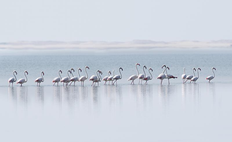 Flamingos, Madagascar