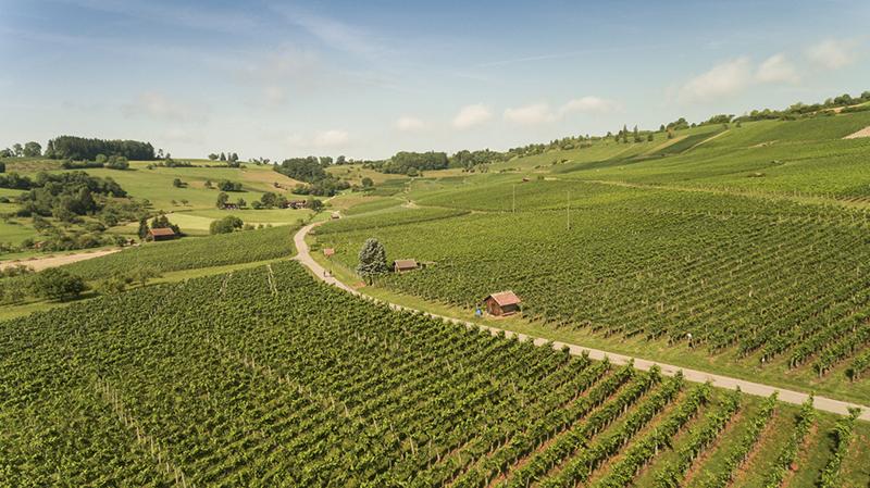 Hallau Vineyards, Switzerland