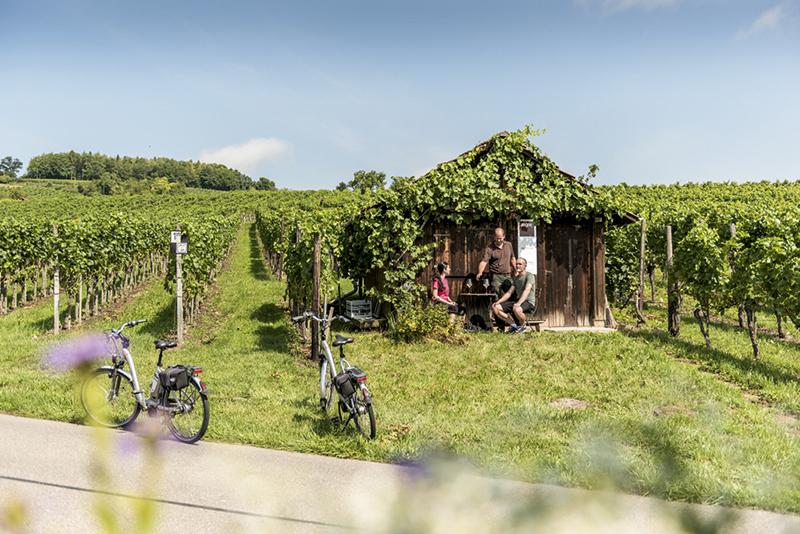 Hallay Vineyards, Switzerland
