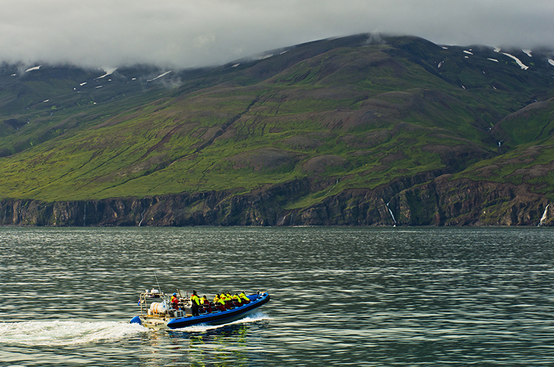 whale watching, Iceland, Husavik, Collette