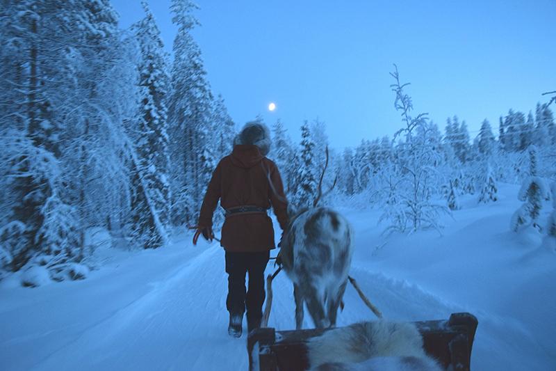 Sleigh ride, reindeer, Finland