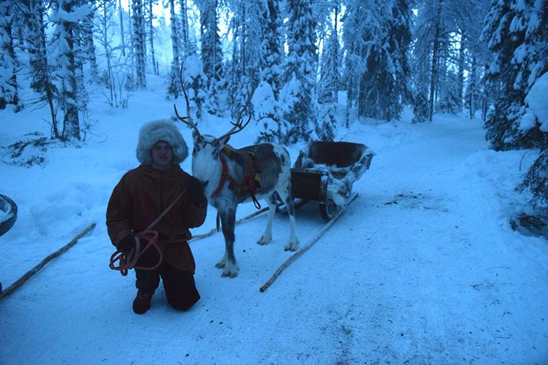 Reindeer, sleigh ride, Finland