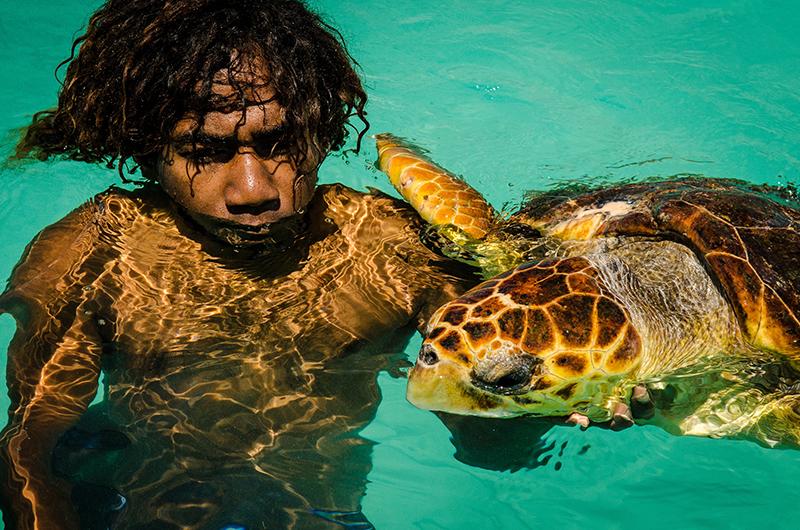 Turtle, New Caledonia
