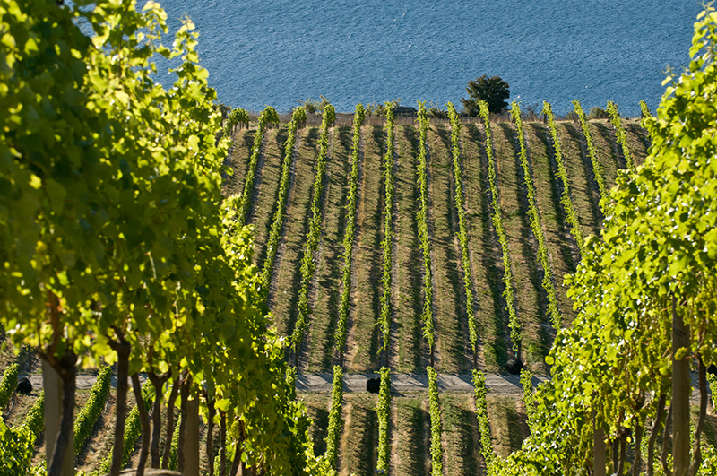 The Rees Hotel Queenstown, Misha's vineyard, New Zealand, wineries