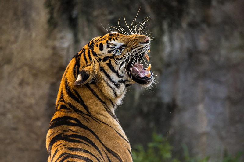 illegal wildlife