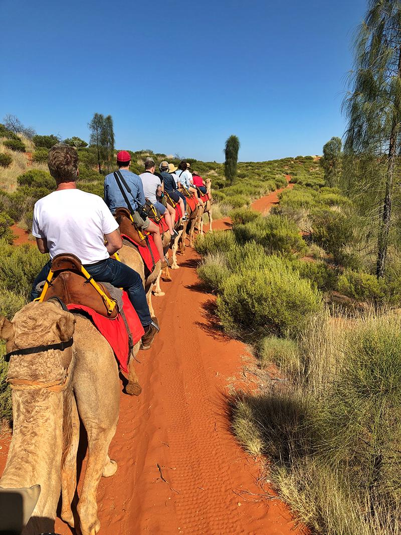 Camel riding, Uluru, Ayers Rock