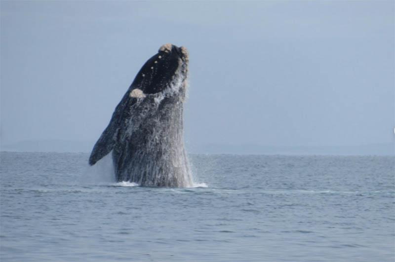 Kangaroo Island Ocean Safari, whale watching, South Australia