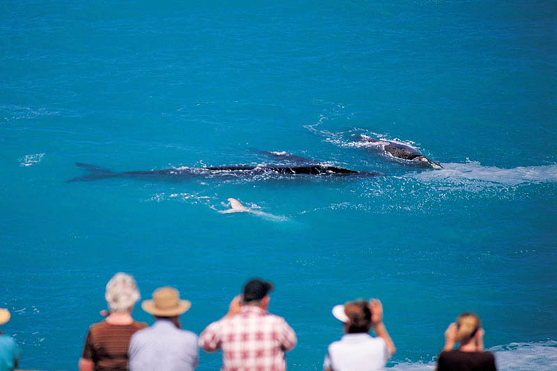 Eyre Peninsula Nullarbor Plain, whale watching, South Australia
