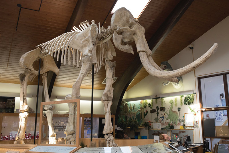 Fossil, dig for a day, dinosaurs in Wyoming, Tate Museum at Casper Collage, largest mammoth in the US, Wyoming Dinosaur Centre, Thermpolis, Jimbo, Supersaurus,