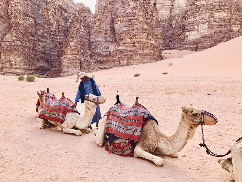 Middle East, Jordan, Petra, Camels, Desert, Wadi Rum