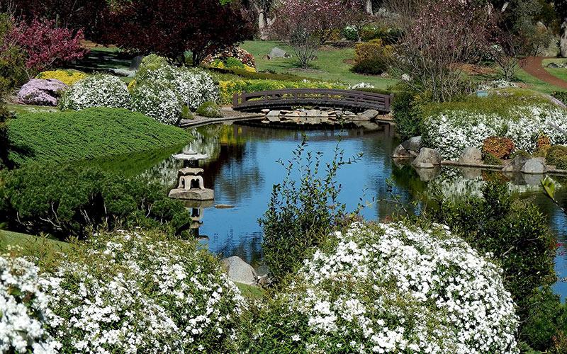 Sakura Matsuri, Cherry Blossom, Festival, flowers, flower festivals, NSW, Cowra, spring, Japanese culture