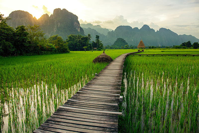 Travelbay, Laos, Private Tours, Ricefields, Vang Vieng