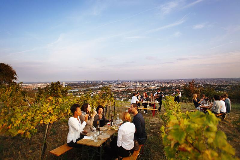 Austria, wine region, vineyard