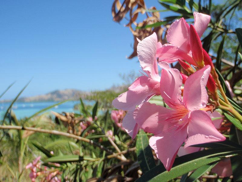 Paradise Bride, dreamy islands, island weddings, fiji, romantic break, romantic getaway