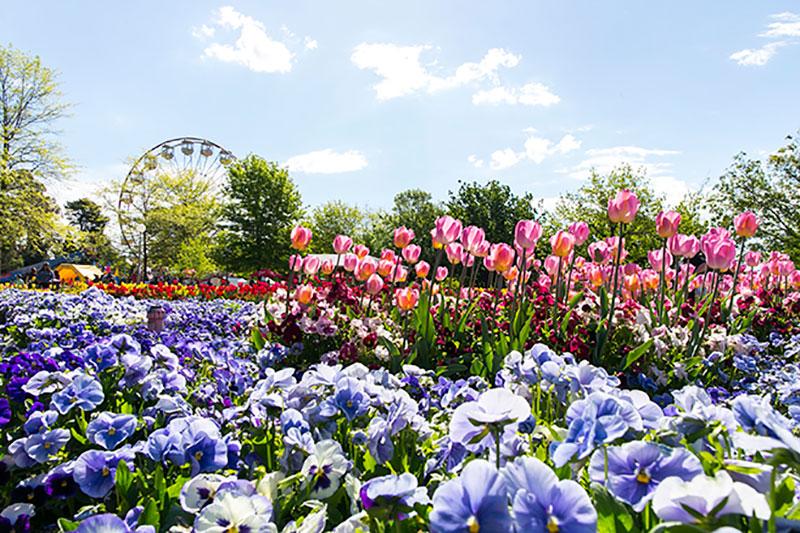 Floriade, Canberra, Spring in Australia, Flower festival in Australia