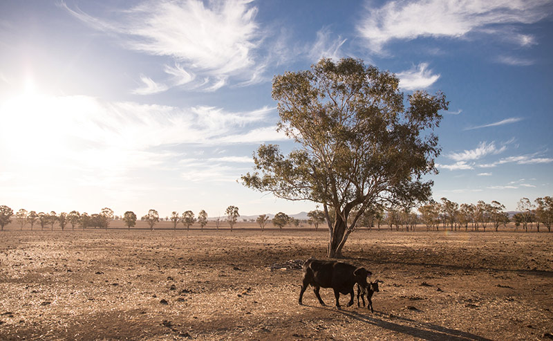 Qantas, Rural Aid, Drought Assitance, Volunteer and Charity