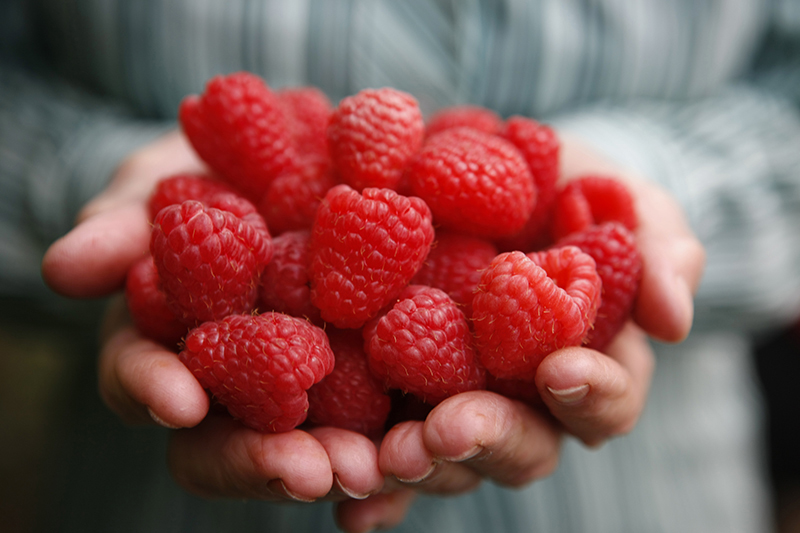 raspberry farm, Tasmania, Tamar Valley, Tasmania, 48 hours in Launceston, Lonnie, We love Lonnie, Discover Tasmania, Road trips, Short breaks from Sydney, Short breaks from Melbourne