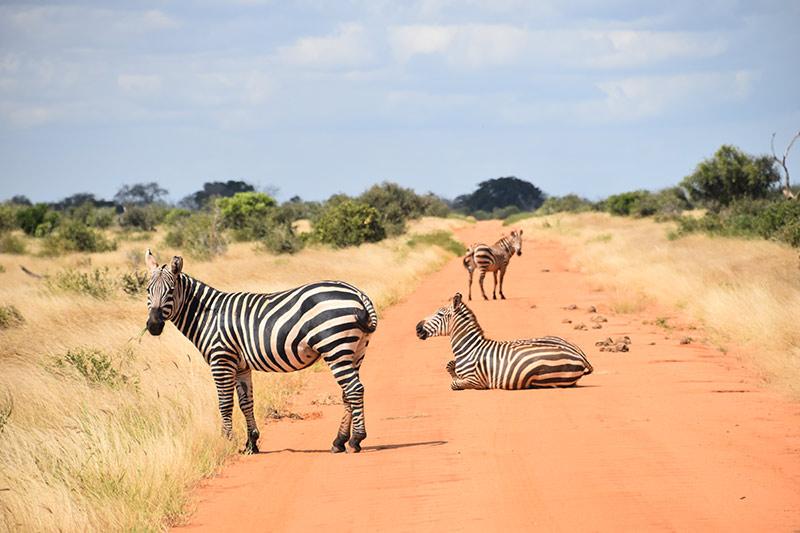 Garonga Safari Camp, Bench Africa, South Africa, Safaris in Africa