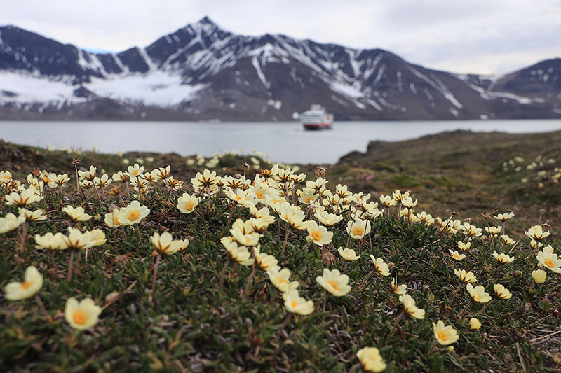 Reasons to travel with Hurtigruten, Hurtigruten, Bentours, Eco-conscious cruises, Cruising with a conscience, Exploring the frontiers of our planet