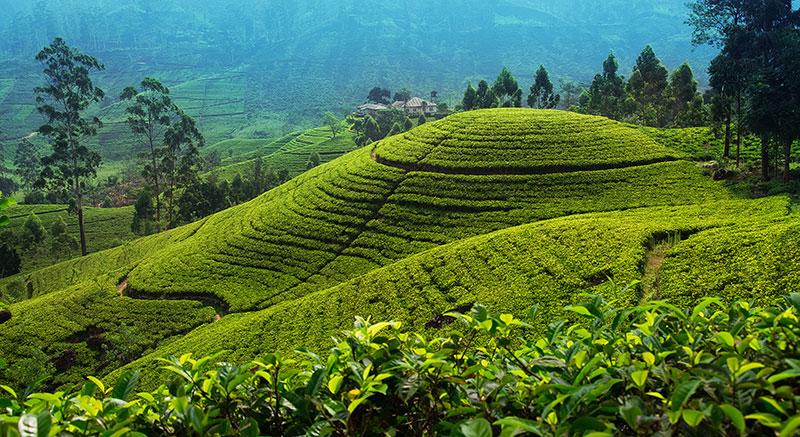 Travelbay-Nuwara-Eliya_800px-1.jpg