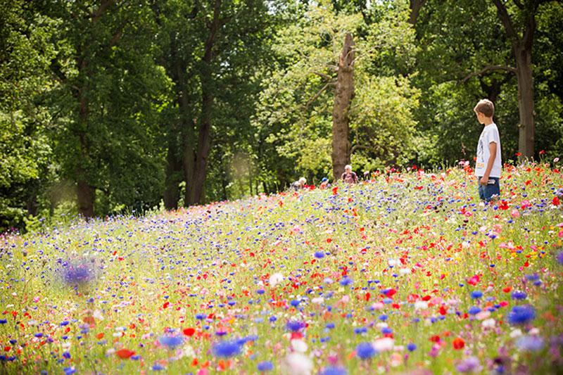 fairies in the garden, reasons to visit Trentham Estate, Trentham Gardens, Artist Robin Wight, Artist Amy Wight, Giant dandelions, Find Fairies in the garden, romantic ruins, Capability Brown, Trentham Hall, Trentham Gardens