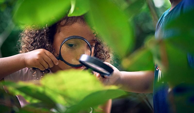 Nature-Detective-04-v2.jpg