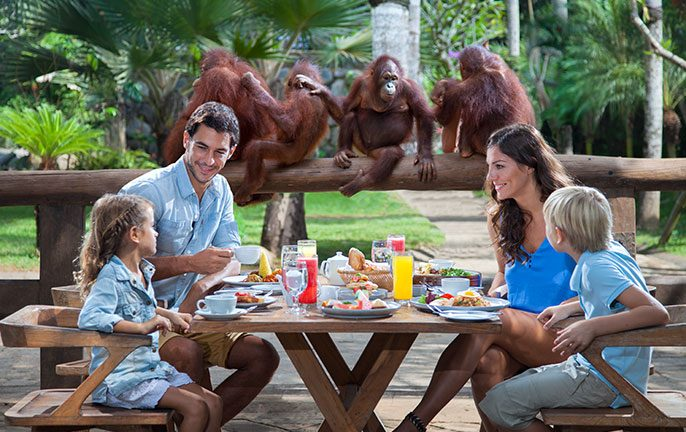 Have Breakfast With Orangutans at Bali Zoo