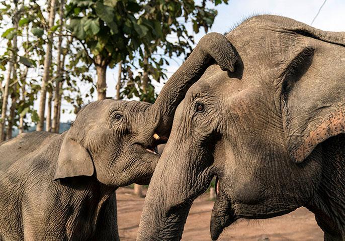 MandaLaoElephant Conservation