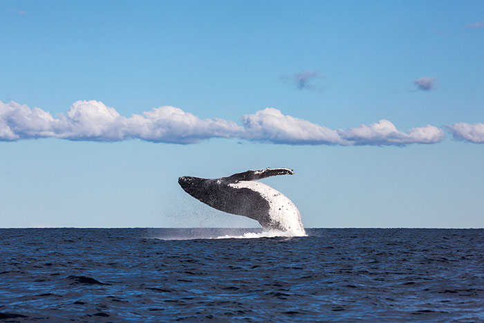 Swim with whales and seals in Jervis Bay