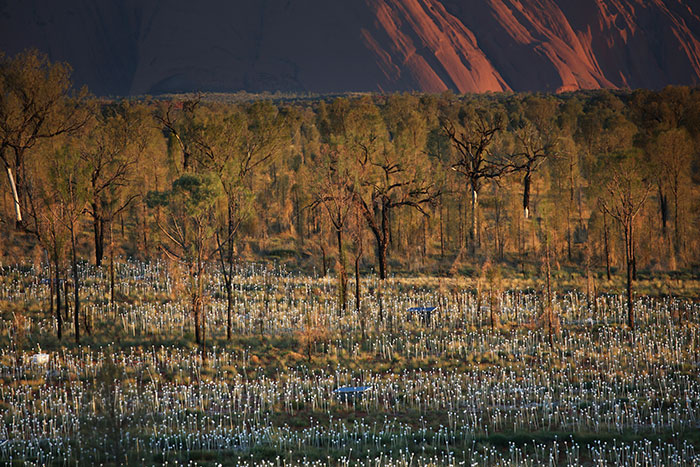 Uluru extends further welcome to Field of Light