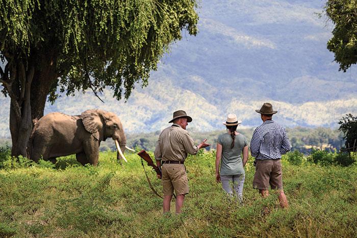 Walk don't run: African Safari
